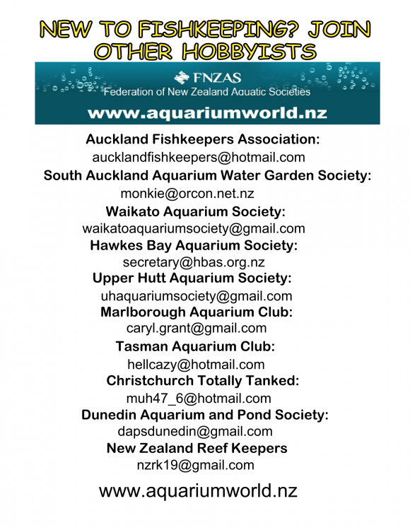 FNZAS poster NZ Clubs_Page_1.png