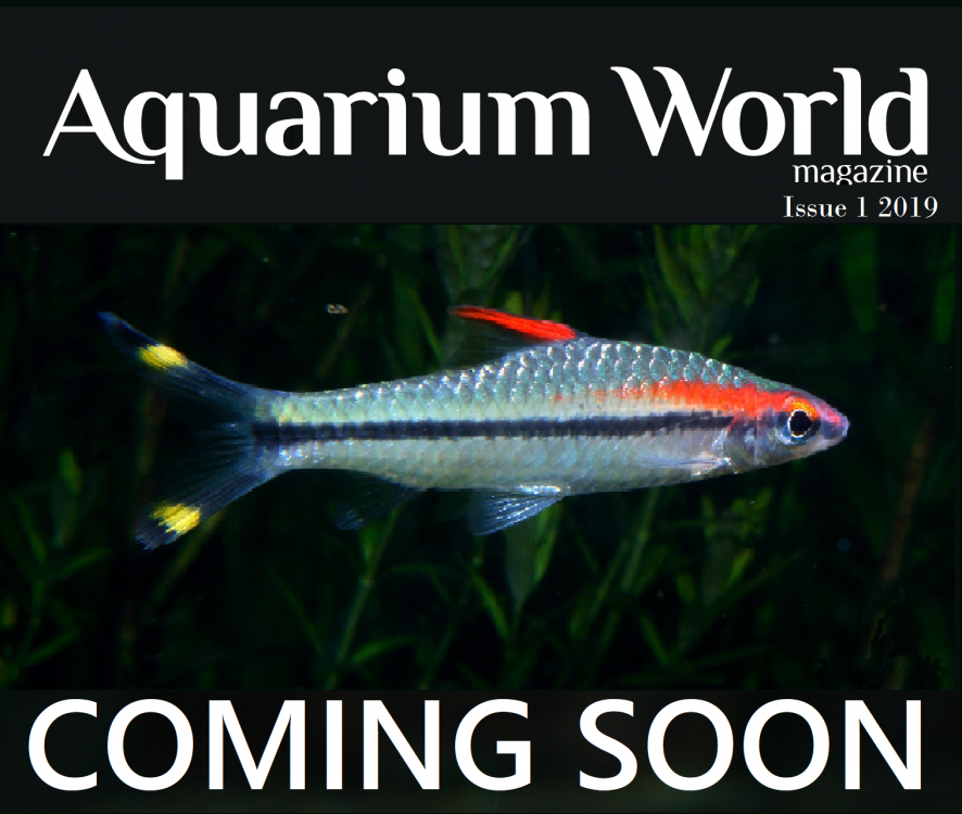 Aquarium World Vol 64 Issue 1 2019 barb.png